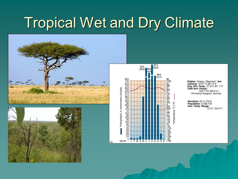 Tropical Wet and Dry Climate