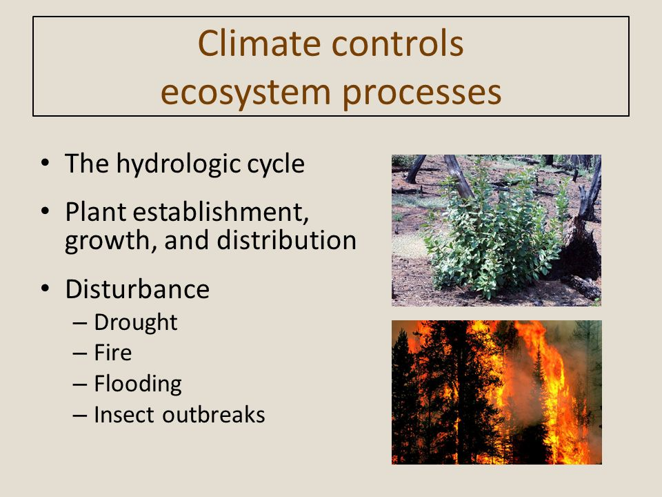 Climate controls ecosystem processes