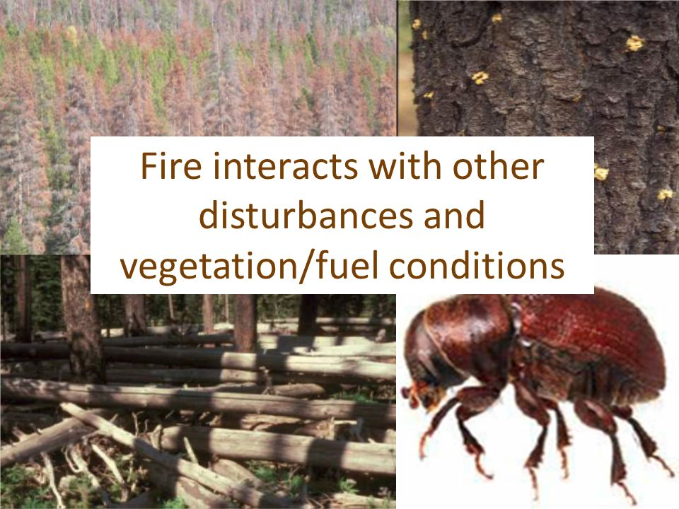 Fire interacts with other disturbances and vegetation/fuel conditions