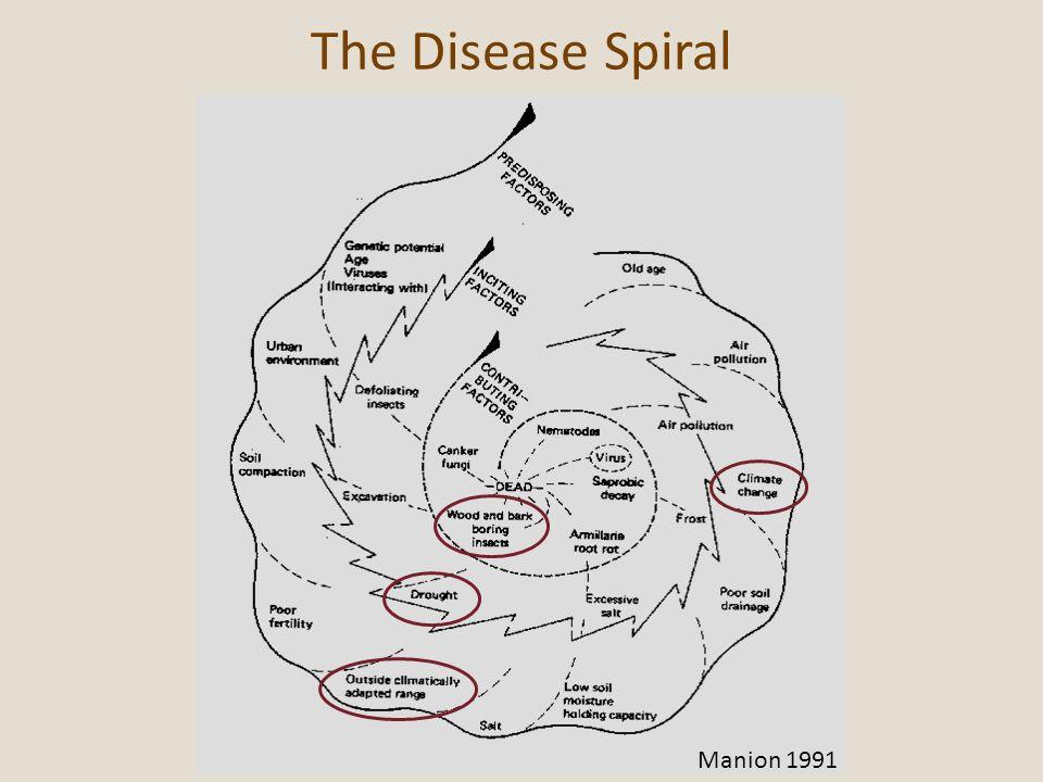 The Disease Spiral Manion 1991