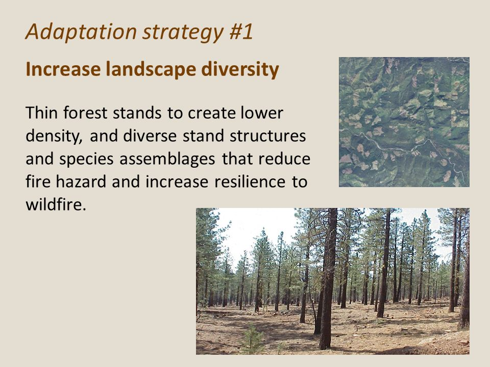Adaptation strategy #1 Increase landscape diversity