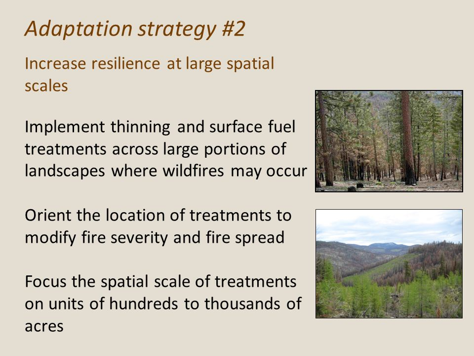 Adaptation strategy #2 Increase resilience at large spatial scales