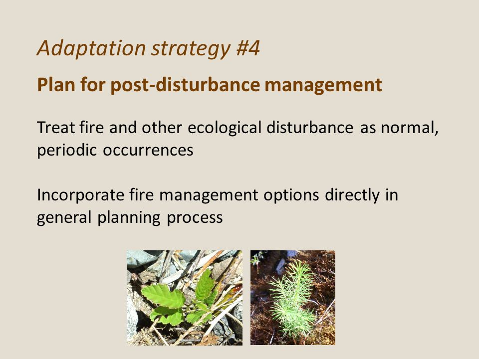 Adaptation strategy #4 Plan for post-disturbance management