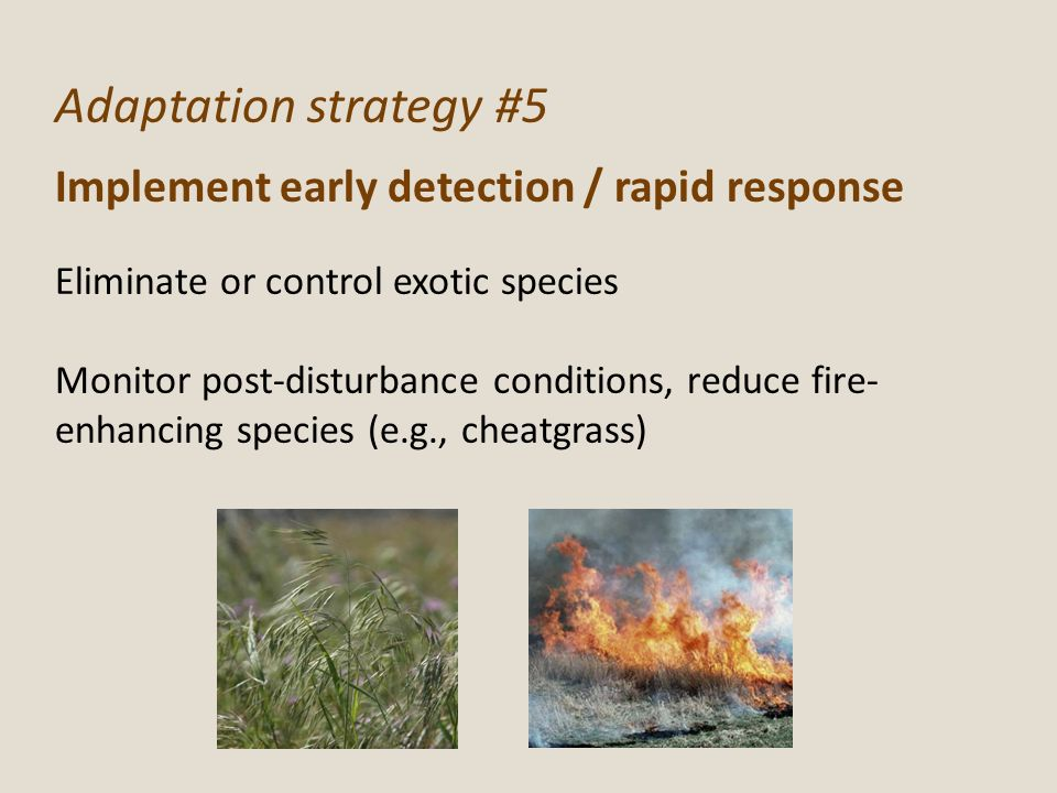 Adaptation strategy #5 Implement early detection / rapid response