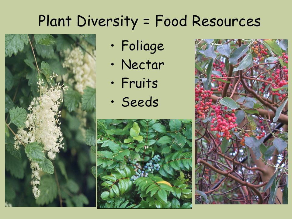 Plant Diversity = Food Resources