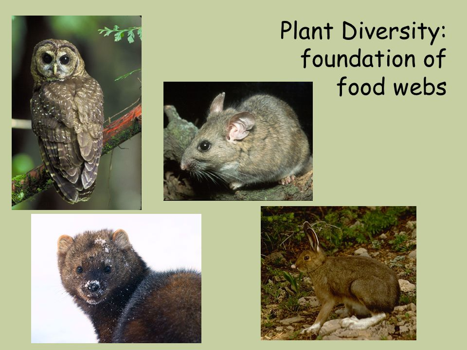 Plant Diversity: foundation of food webs
