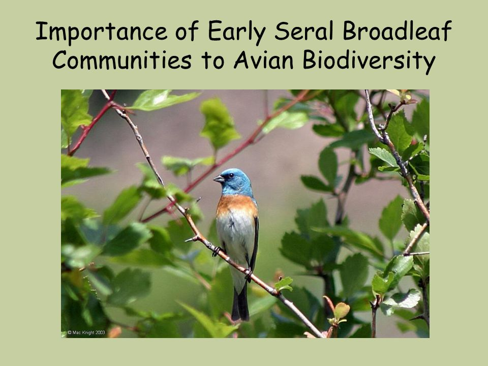 Importance of Early Seral Broadleaf Communities to Avian Biodiversity