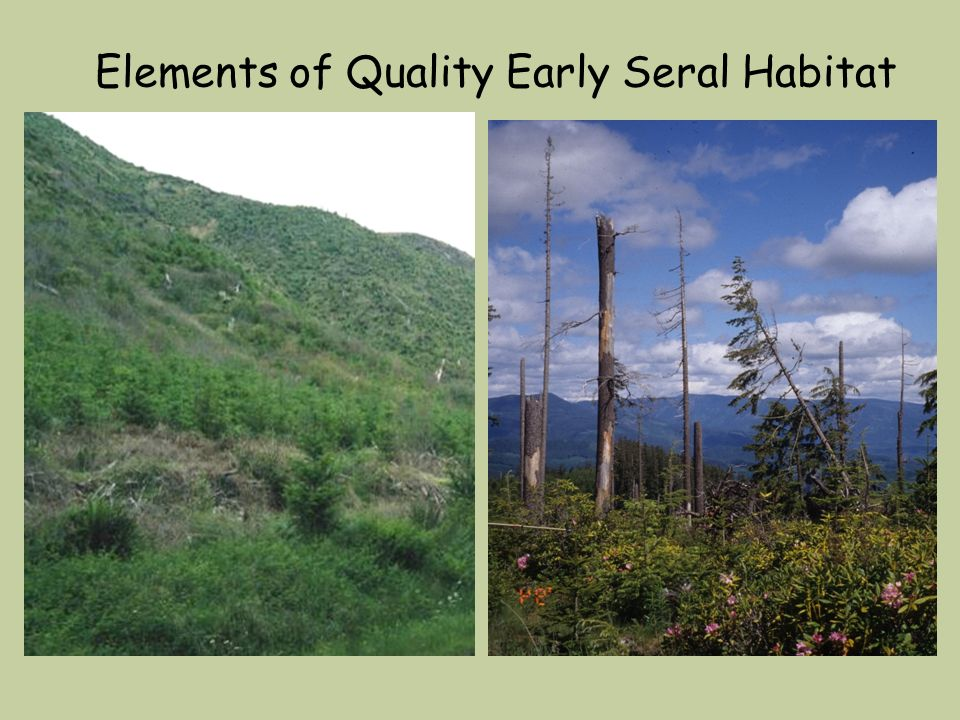 Elements of Quality Early Seral Habitat