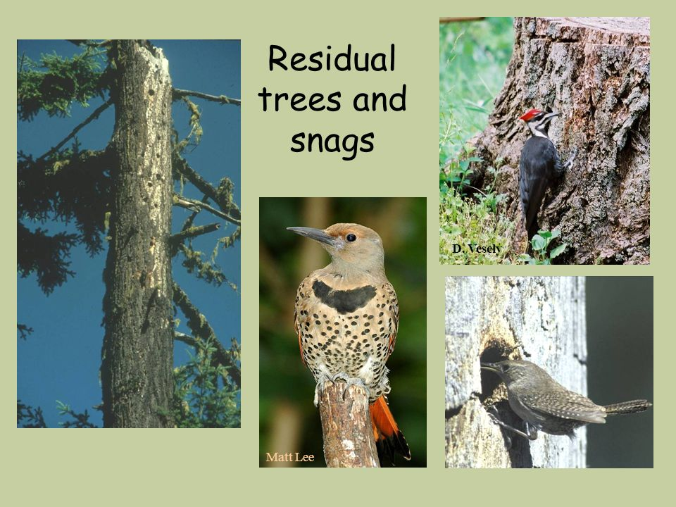 Residual trees and snags