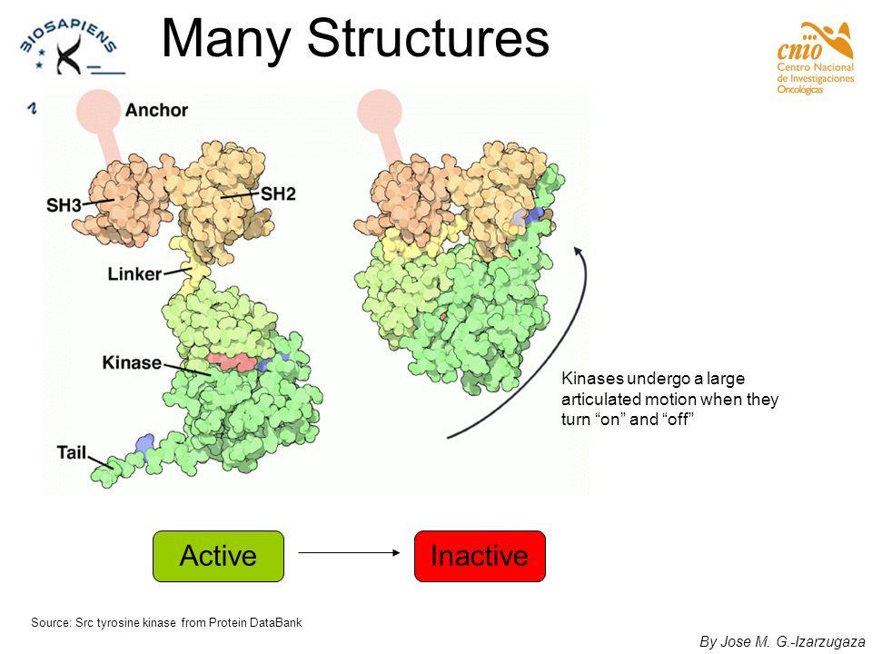 Many Structures Active Inactive Kinases undergo a large