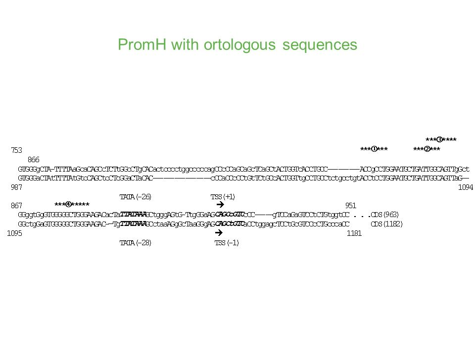 PromH with ortologous sequences