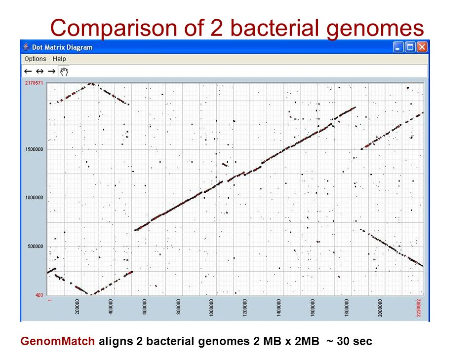 Comparison of 2 bacterial genomes