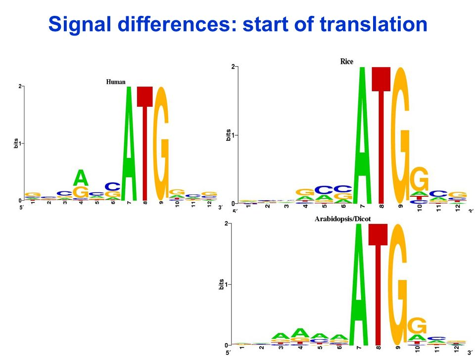 Signal differences: start of translation