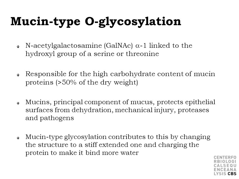 Mucin-type O-glycosylation