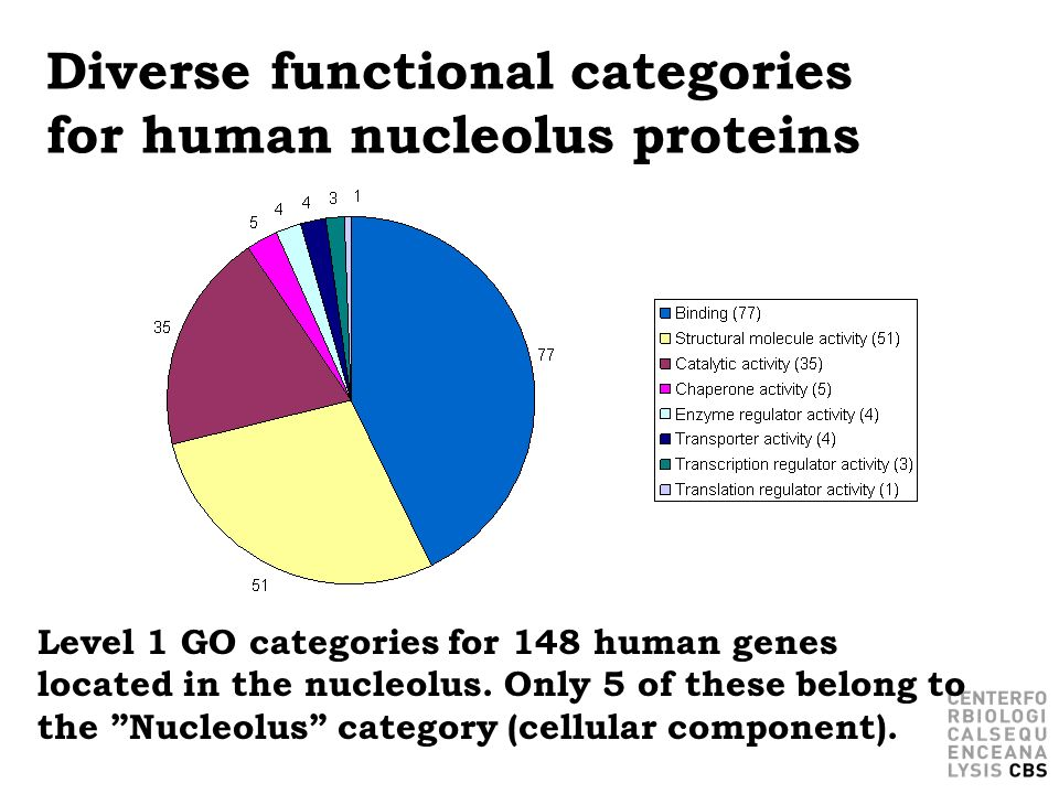 Diverse functional categories for human nucleolus proteins