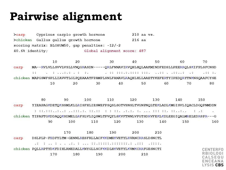 Pairwise alignment >carp Cyprinus carpio growth hormone 210 aa vs.