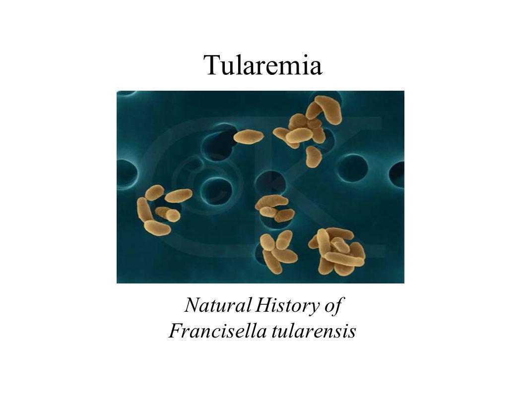 Natural History of Francisella tularensis