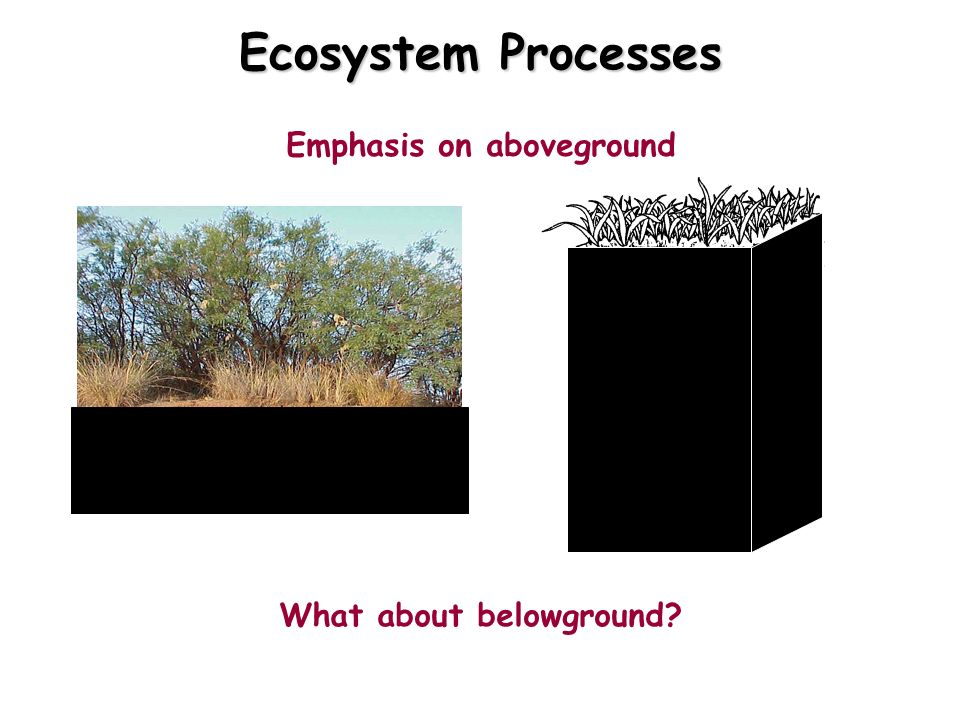 Ecosystem Processes Emphasis on aboveground What about belowground