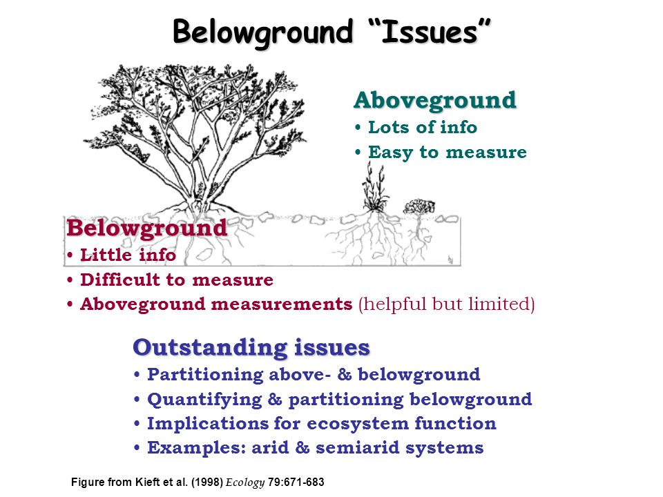 Belowground Issues Aboveground Belowground Outstanding issues