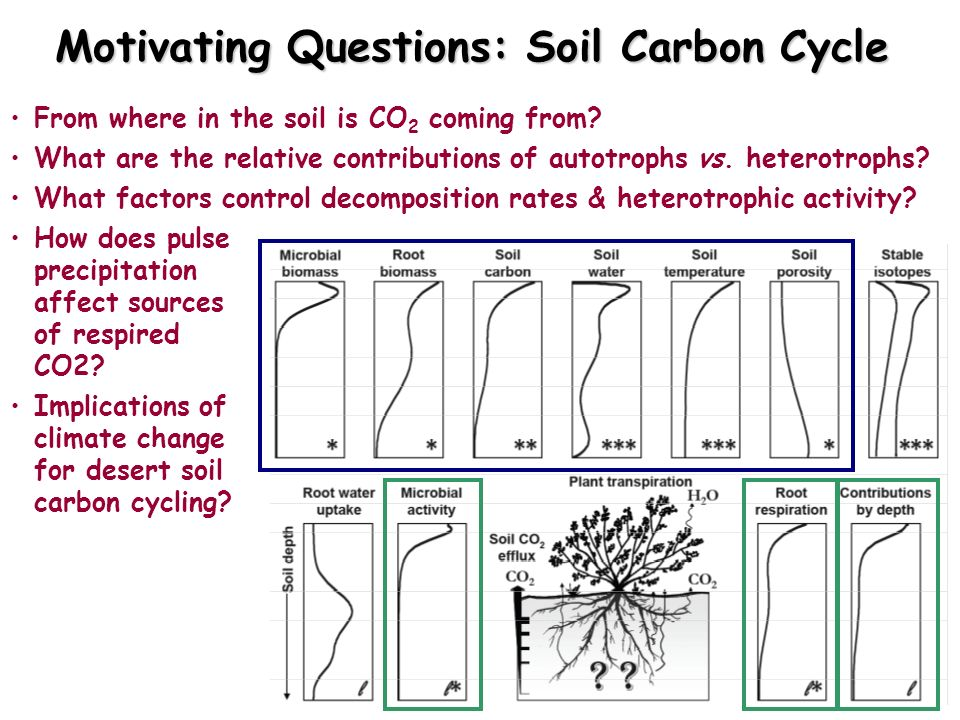 Motivating Questions: Soil Carbon Cycle