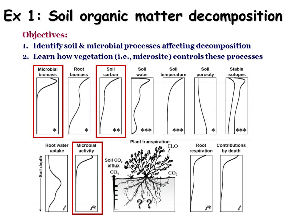 Ex 1: Soil organic matter decomposition