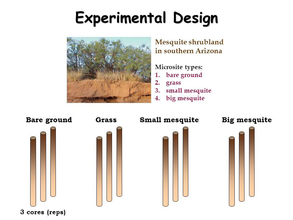 Experimental Design Mesquite shrubland in southern Arizona Bare ground
