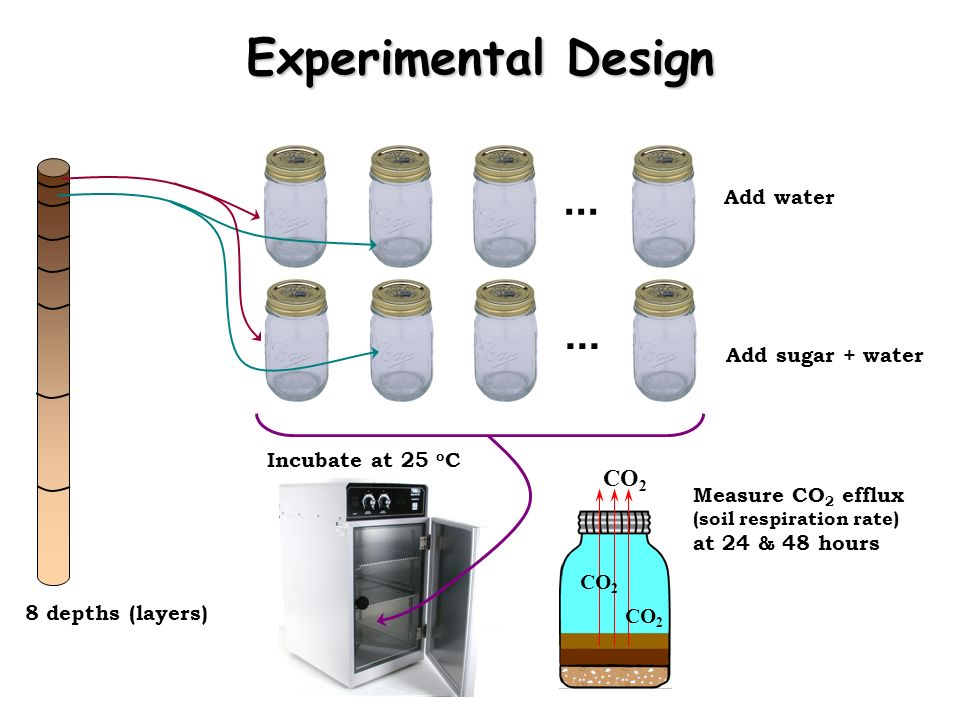 Experimental Design ... ... CO2 Add water Add sugar + water