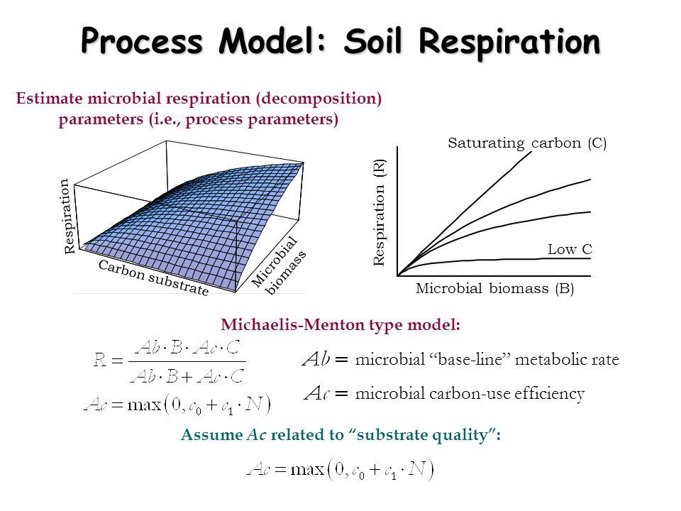 Process Model: Soil Respiration