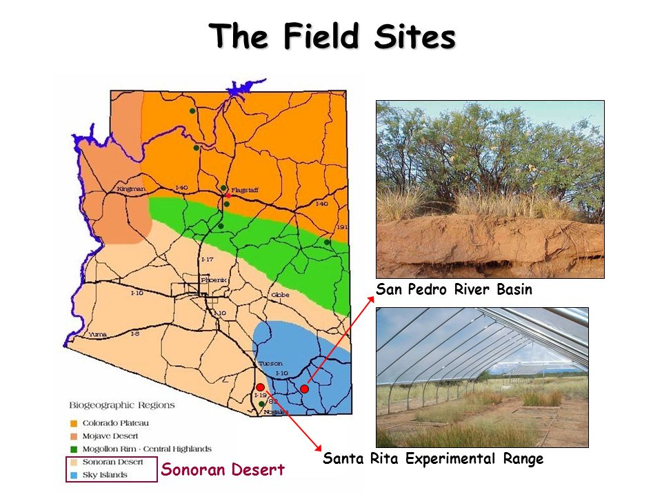 The Field Sites Sonoran Desert San Pedro River Basin
