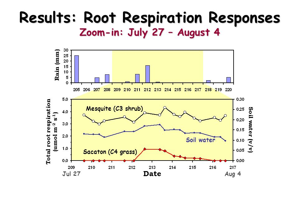 Results: Root Respiration Responses