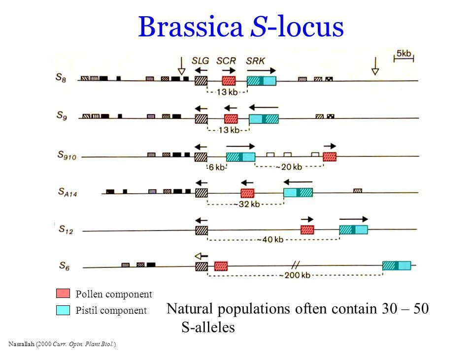 Brassica S-locus Natural populations often contain 30 – 50 S-alleles