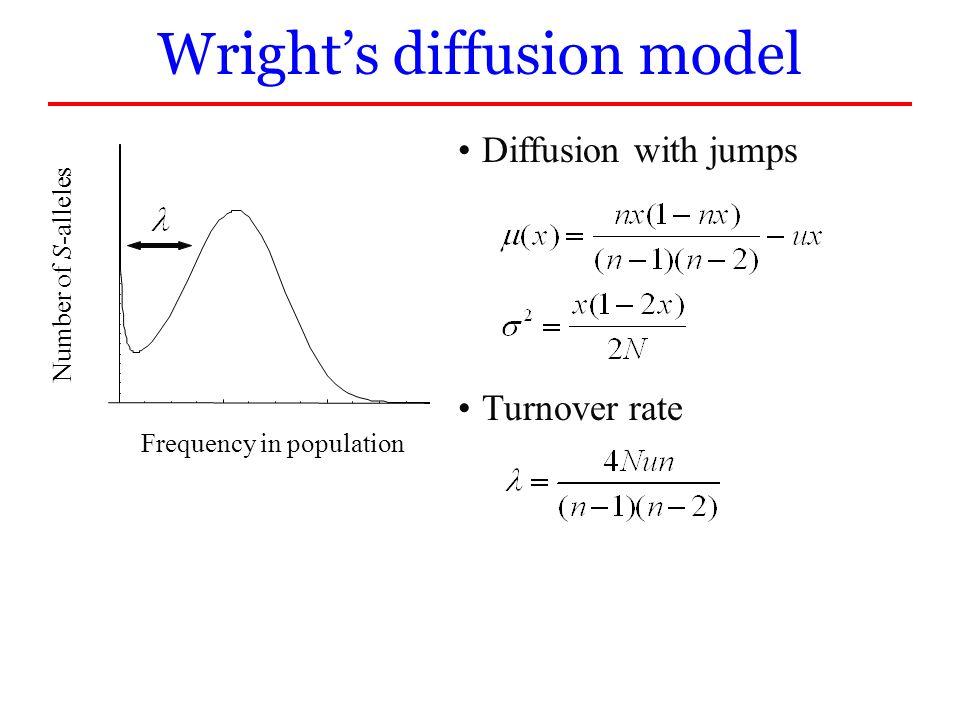 Wright's diffusion model