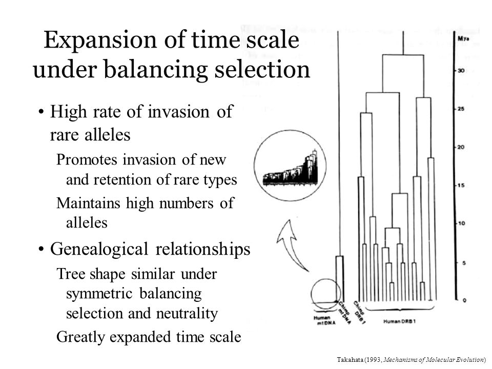 Expansion of time scale under balancing selection