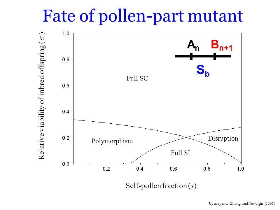 Fate of pollen-part mutant