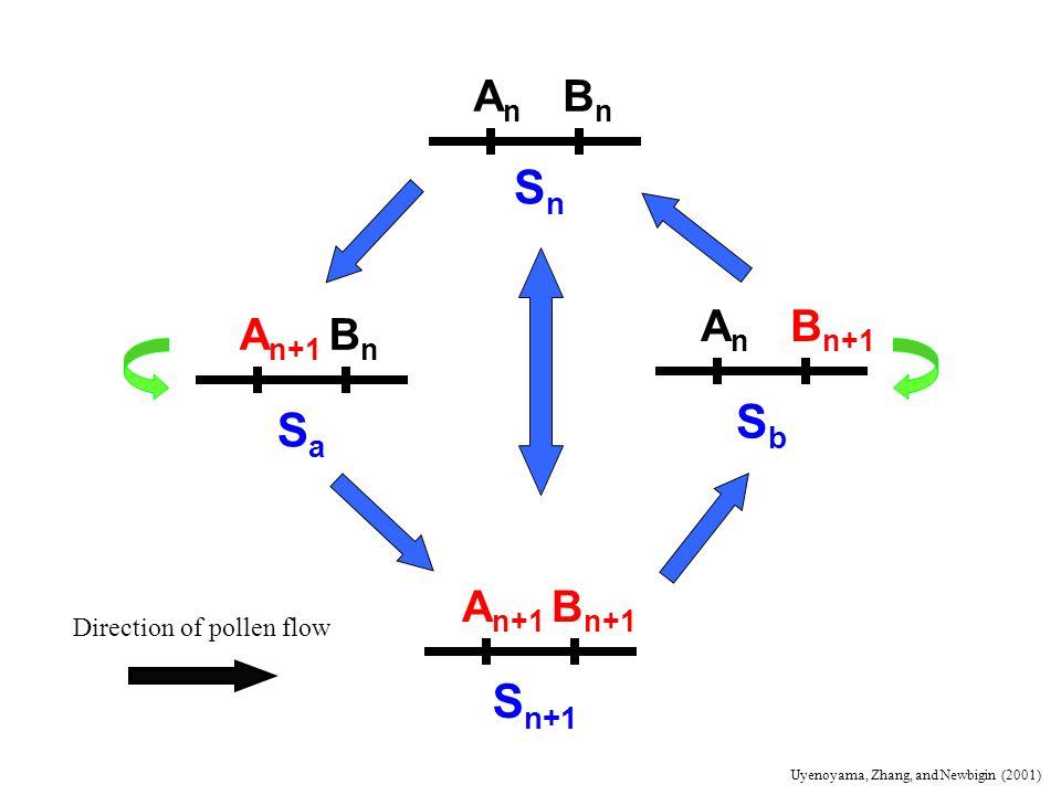 Sn Sb Sa Sn+1 An Bn An Bn+1 An+1 Bn An+1 Bn+1 Direction of pollen flow