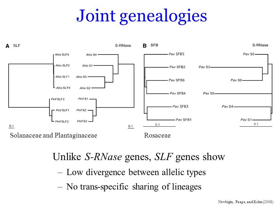 Joint genealogies Unlike S-RNase genes, SLF genes show