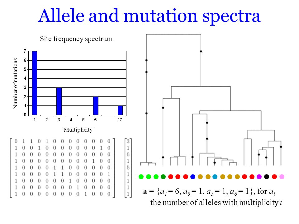 Allele and mutation spectra