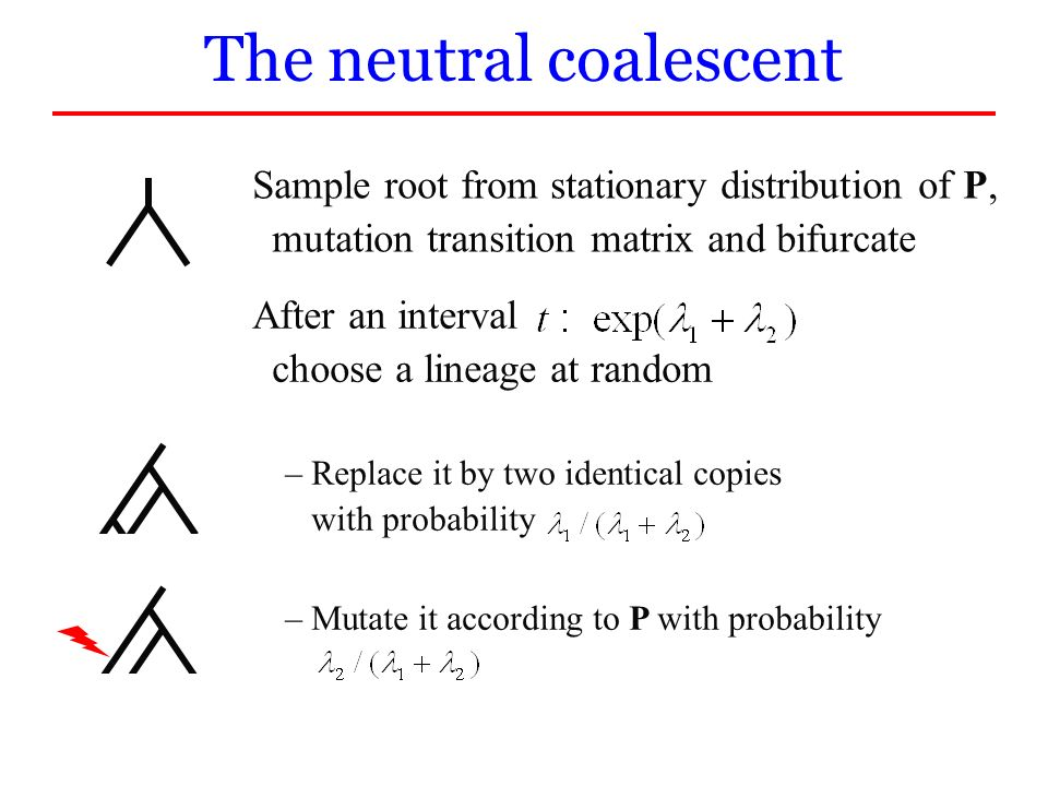 The neutral coalescent