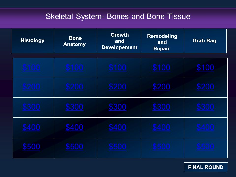 Perfecto Describe The Anatomy And Histology Of Bone Tissue ...