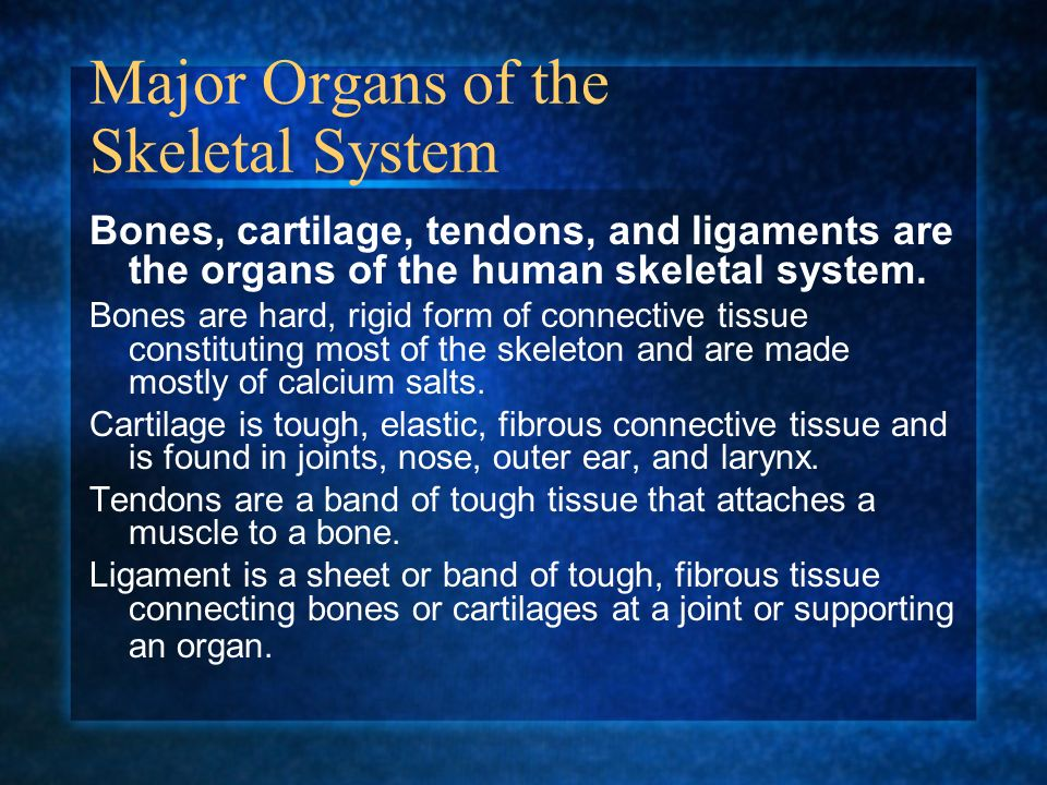 skeletal system your skeletal system is all of the bones in the, Skeleton