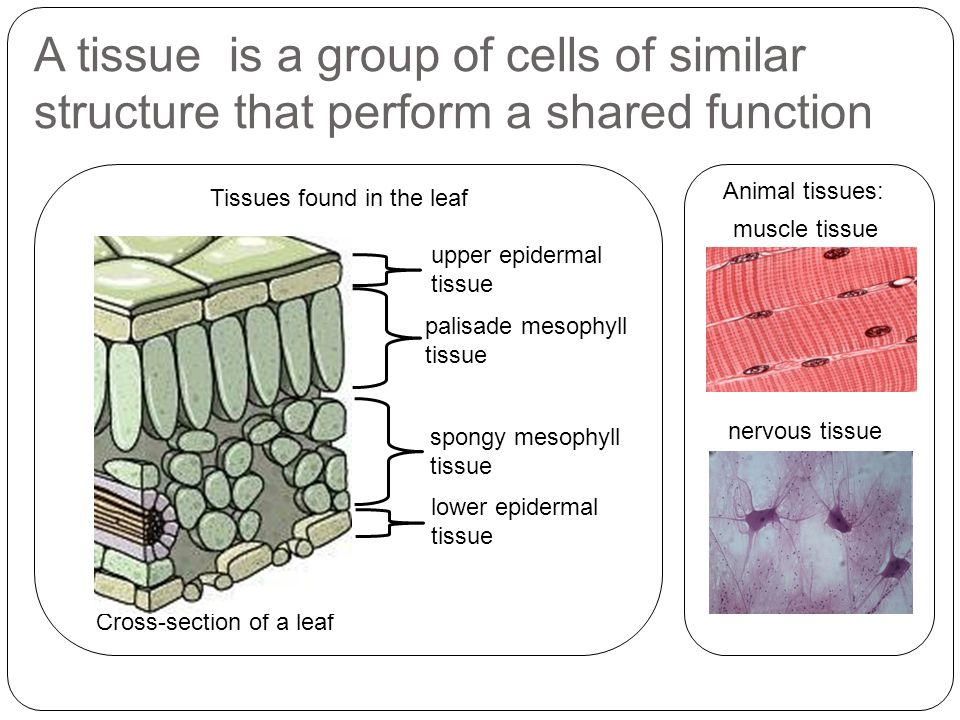 Group Of Tissues That Perform A Specific Function 36