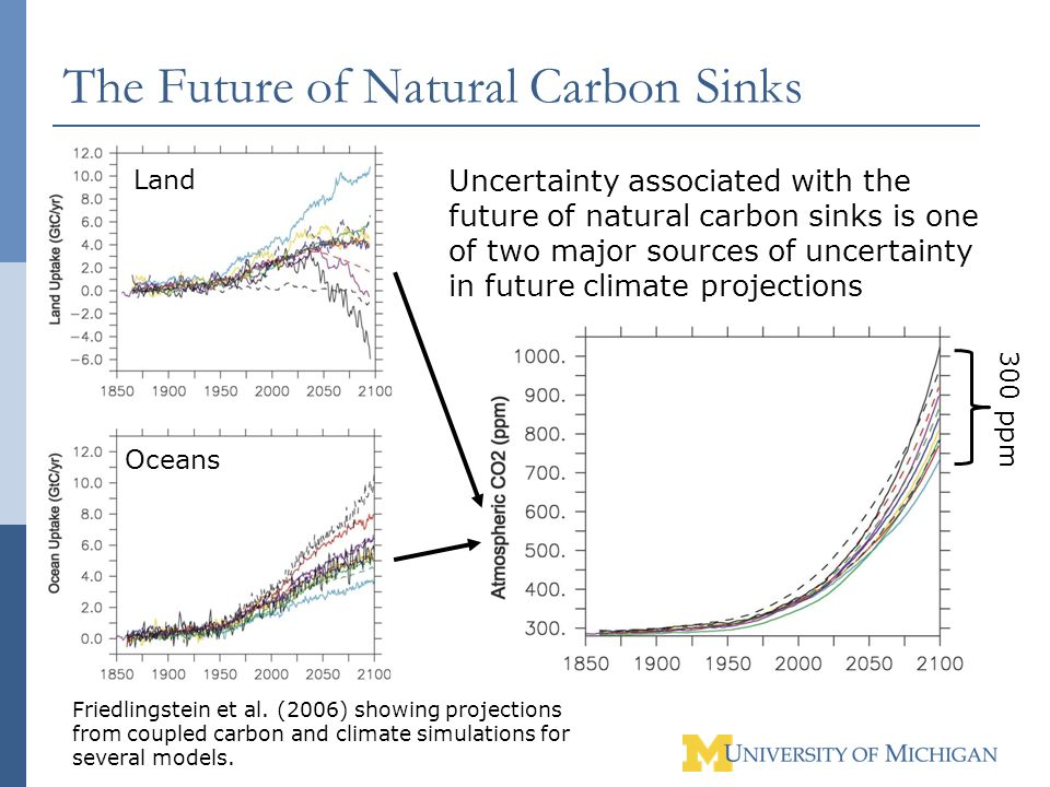 The Future of Natural Carbon Sinks