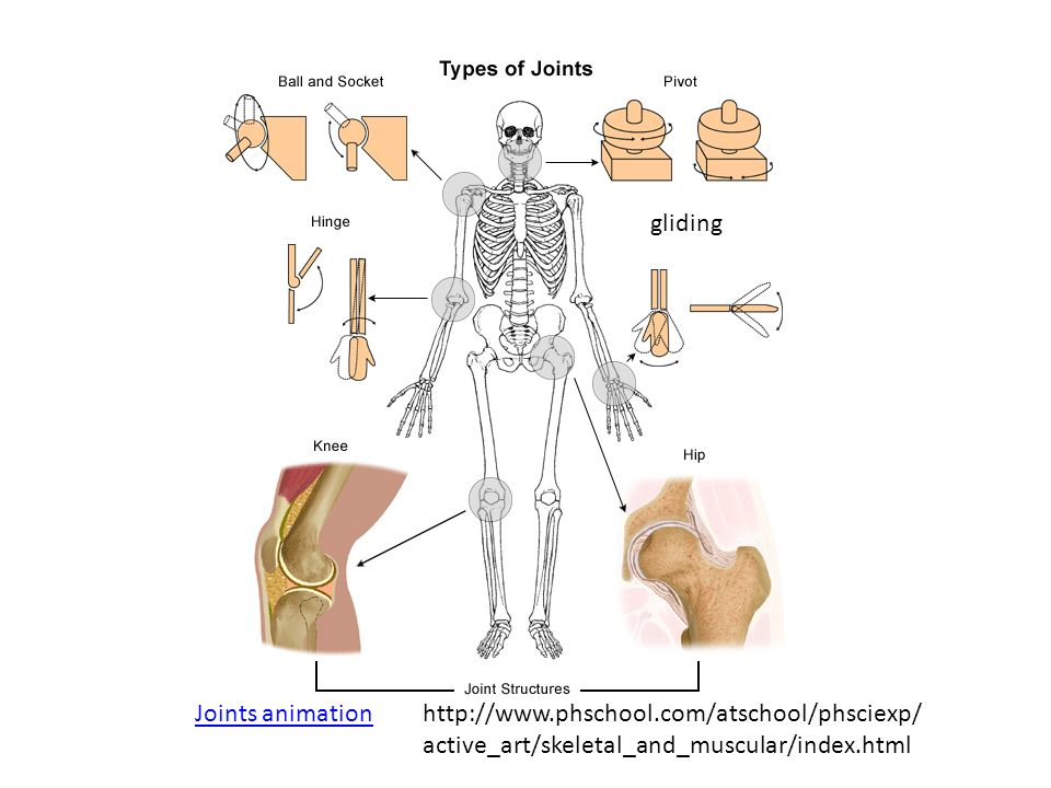 methods of dating bones Paleoanthropological methods: dating fossils absolute dating there are a variety of methods that yield actual calendrical dates for strata the bones are in.