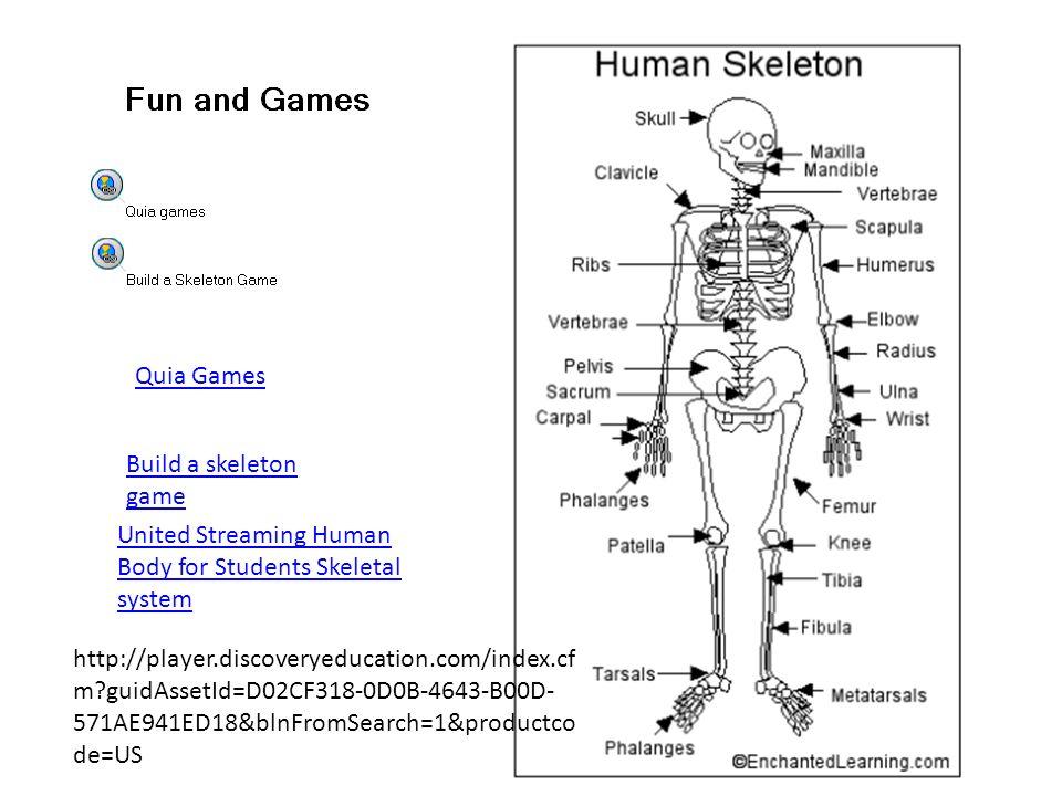 build a human skeleton game – citybeauty, Skeleton