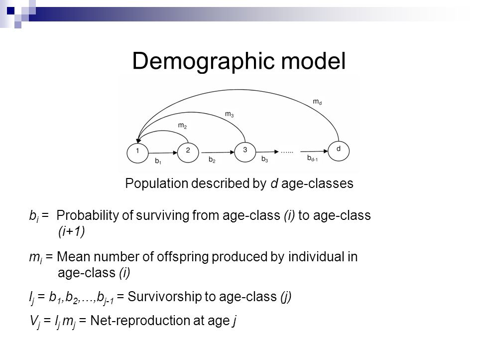 Population described by d age-classes