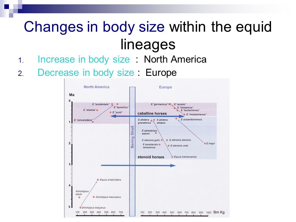 Changes in body size within the equid lineages