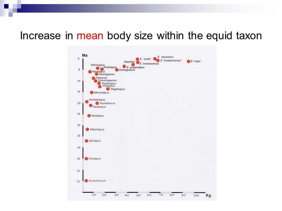 Increase in mean body size within the equid taxon