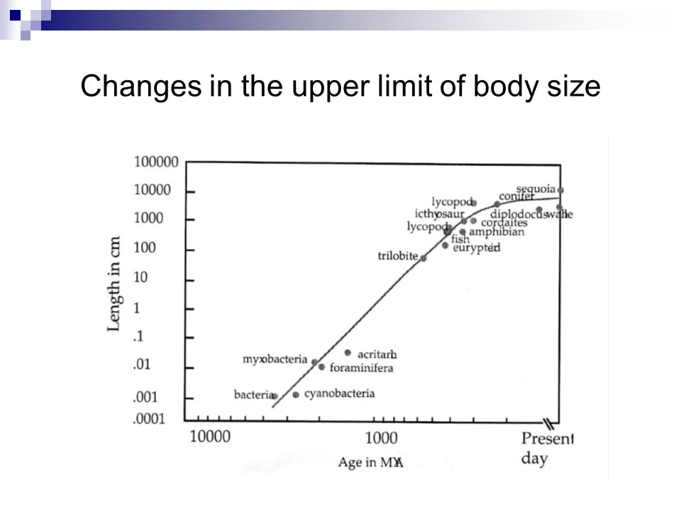 Changes in the upper limit of body size