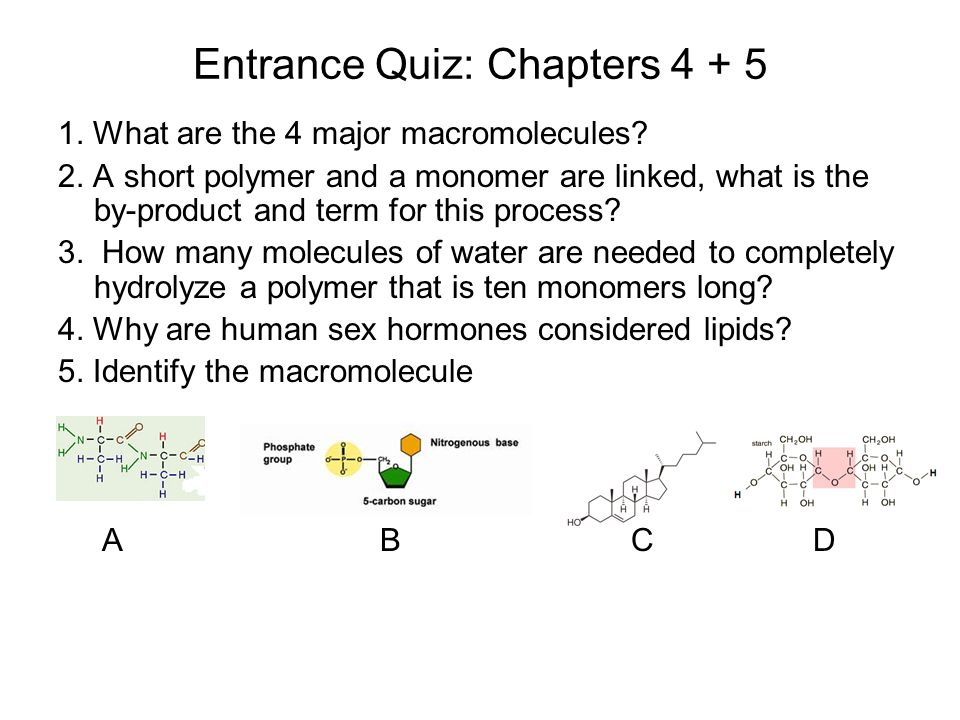 why are human sex hormones considered to be lipids