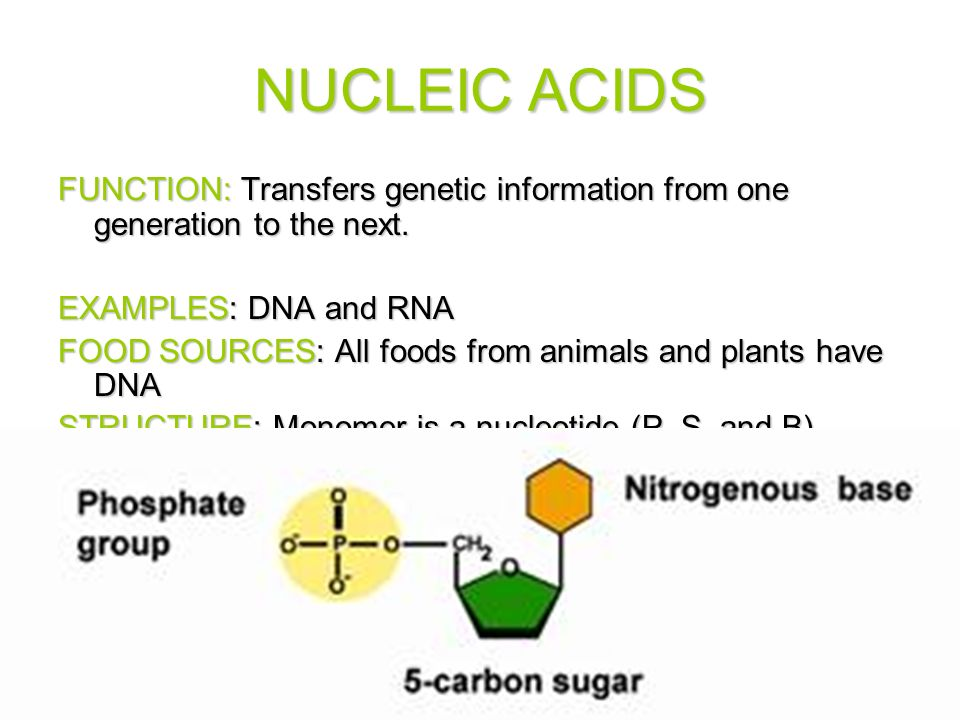 Nucleic Acids Examples Food